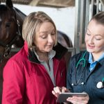 Equine Acupuncture - Another Way To Treat Injuries